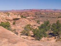 Rastro de Slickrock en el parque nacional de Canyonlands foto de archivo