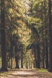 Rastro del árbol de la iluminación Bosque verde de la primavera en rayos del sol fotos de archivo libres de regalías