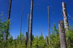 Rastro del alto bosque del Mt. Lusen Foto de archivo