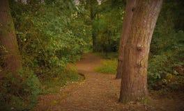 Rastro del arbolado del bosque que lleva abajo de una colina Foto de archivo libre de regalías