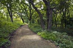 Rastro del bosque Fotos de archivo libres de regalías