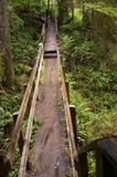 Rastro del bosque Fotografía de archivo libre de regalías