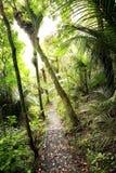 Rastro del bosque Imagen de archivo