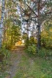 Rastro del bosque Fotos de archivo