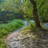 Rastro del bosque cerca del remanso en el otoño temprano Imagenes de archivo
