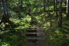 Rastro del bosque con pasos de madera fotografía de archivo