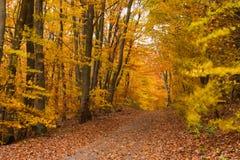Rastro del bosque de la caída Foto de archivo
