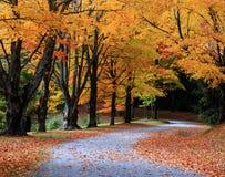 Rastro del bosque del otoño imagen de archivo libre de regalías
