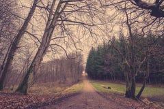 Rastro del bosque en el amanecer Fotografía de archivo