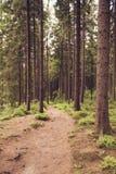 Rastro del bosque en el verano II Fotografía de archivo