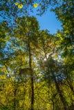 Rastro del bosque en la caída Imagen de archivo libre de regalías