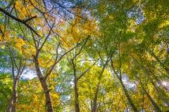Rastro del bosque en la caída Fotografía de archivo libre de regalías