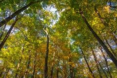 Rastro del bosque en la caída Fotos de archivo