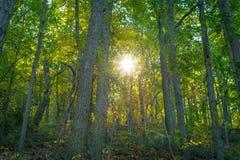 Rastro del bosque en la caída Imagen de archivo
