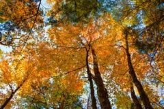 Rastro del bosque en la caída Fotografía de archivo