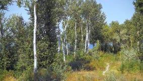 Rastro del bosque en la orilla del río Imagenes de archivo