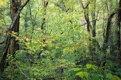 Rastro del bosque en bosque del otoño Imagenes de archivo