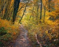 Rastro del bosque en bosque del otoño Foto de archivo libre de regalías