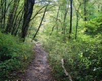 Rastro del bosque en bosque del otoño Imagen de archivo libre de regalías