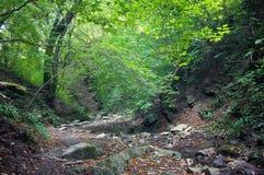 Rastro del bosque en bosque del otoño Foto de archivo