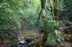 Rastro del bosque en bosque del otoño Imágenes de archivo libres de regalías