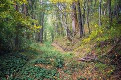 Rastro del bosque en bosque del otoño Fotos de archivo libres de regalías
