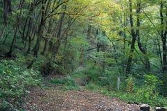 Rastro del bosque en bosque del otoño Fotos de archivo