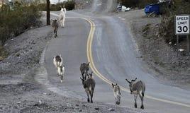 Rastro del burro Imagenes de archivo