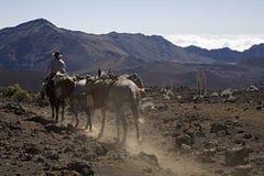 Rastro del caballo Imagen de archivo libre de regalías