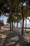 Rastro del coco de Lingshui de la isla del límite Fotografía de archivo libre de regalías