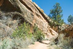 Rastro del desierto Foto de archivo