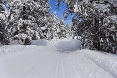 Rastro del esquí en bosque nevoso fotografía de archivo libre de regalías