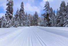 Rastro del esquí en bosque nevoso fotografía de archivo