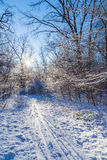 Rastro del esquí en bosque soleado del invierno Imagenes de archivo