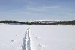 Rastro del esquí Fotografía de archivo libre de regalías