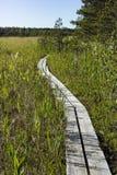 Rastro del estudio de naturaleza de Valgejarve en Estonia Imagenes de archivo