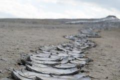Rastro del fango secado Imagenes de archivo