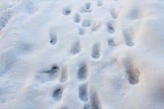 Rastro del gato Imagen de archivo libre de regalías