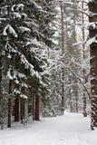 Rastro del invierno Fotografía de archivo libre de regalías