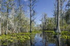 Rastro del kajak de la canoa del lago Minnies, reserva del nacional del pantano de Okefenokee foto de archivo