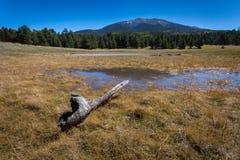 Rastro del lago bismarck en Arizona septentrional Fotografía de archivo