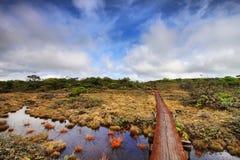 Rastro del pantano de Alakai imagenes de archivo