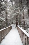 Rastro del parque de estado del Blackwater con nieve e hielo Imagen de archivo