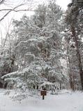 Rastro del parque de estado del Blackwater con nieve e hielo Foto de archivo