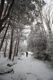 Rastro del parque de estado del Blackwater en nieve Foto de archivo libre de regalías