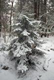 Rastro del parque de estado del Blackwater en nieve Imagen de archivo libre de regalías