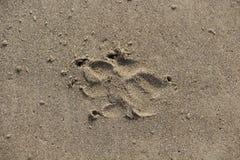 Rastro del perro en la arena Foto de archivo libre de regalías