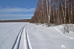 Rastro del Snowmobile a lo largo de las maderas Fotografía de archivo libre de regalías