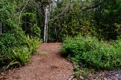 Rastro del sur del parque de la Florida Foto de archivo libre de regalías