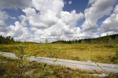 Rastro del verano en Finlandia Foto de archivo libre de regalías